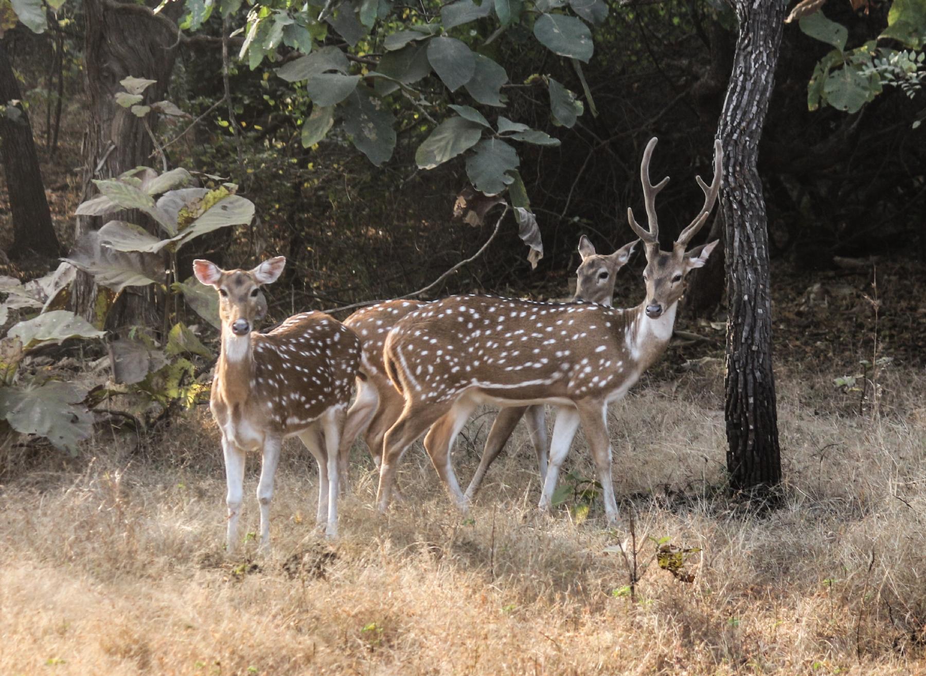 Animal census released by Van Vihar National Park