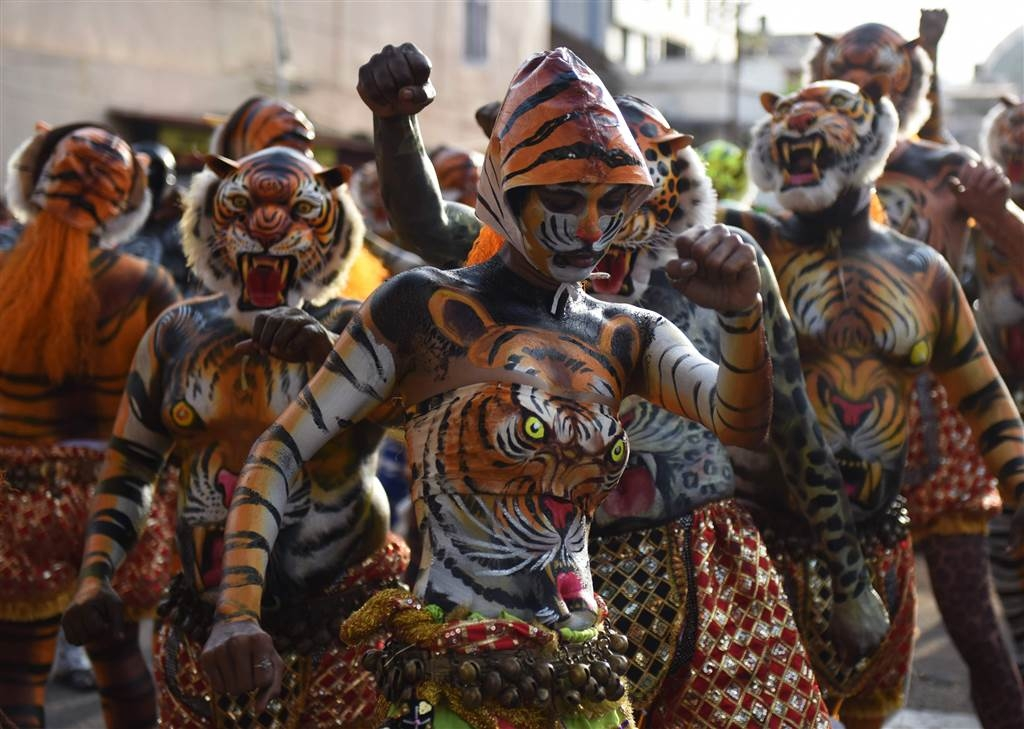 Performers painted as tiger takes part in the Pulikali or Tiger Dance during the Onam festival in Thrissur In Kerala
