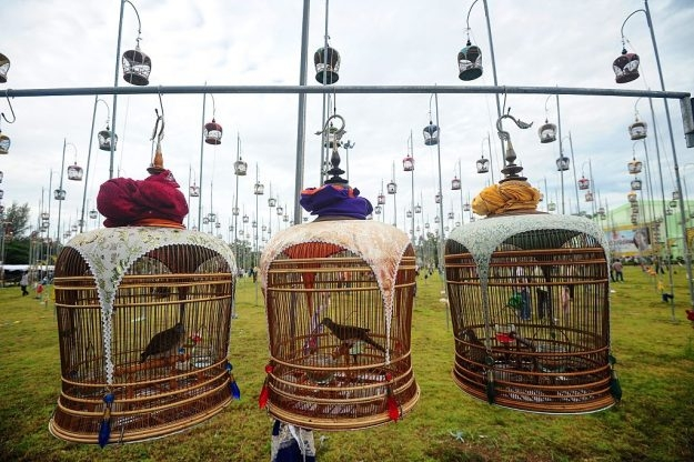 Birds sit in their cages during a bird singing contest in Thailands southern province of Narathiwat