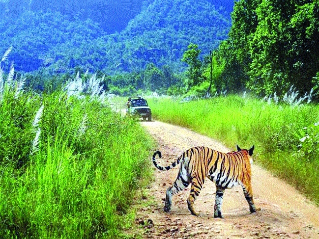 forest officers gear up to ensure compliance guidelines in national park