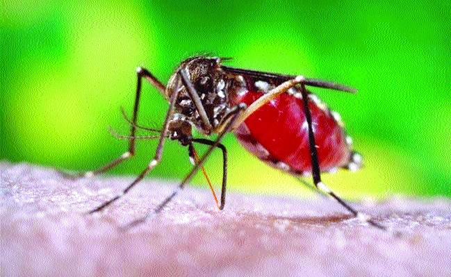 10 dengue, 5 chikungunya samples test positive