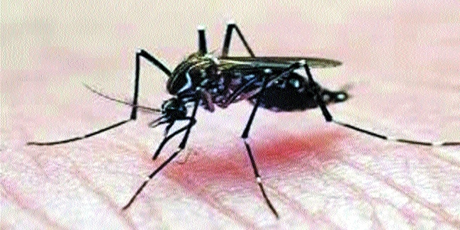 Record 103 dengue patients tested in a day; 53 tested for Chikungunya