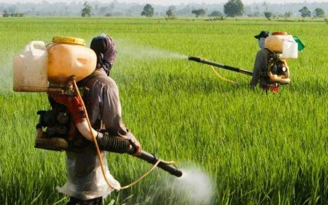 Toxic pesticides caused 21 deaths in Yavatmal