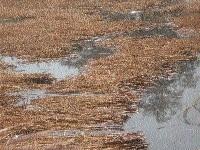 Water Resources Deptt overlooking security of canals