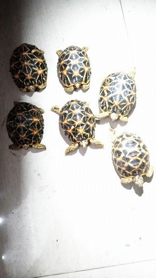 Foresters seize 9 turtles in two separate cases in city