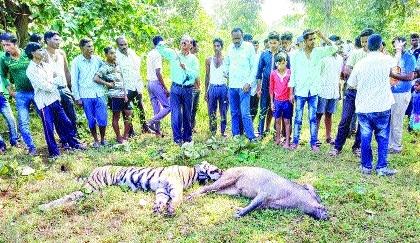 Full-grown tigress, wild boar found dead in Gadchiroli forest