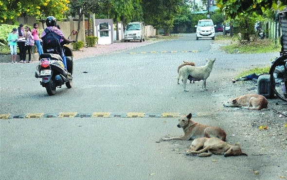 Menace of stray dogs continues in city, thanks to failure of NMC and agencies