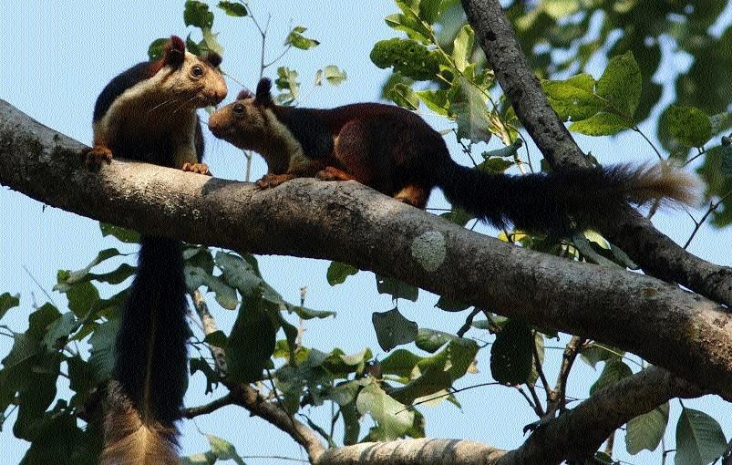 'Karat Musa', major attractions in Kanger Ghati National Park