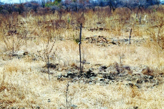 Birders claim failure of plantation in Ambazari
