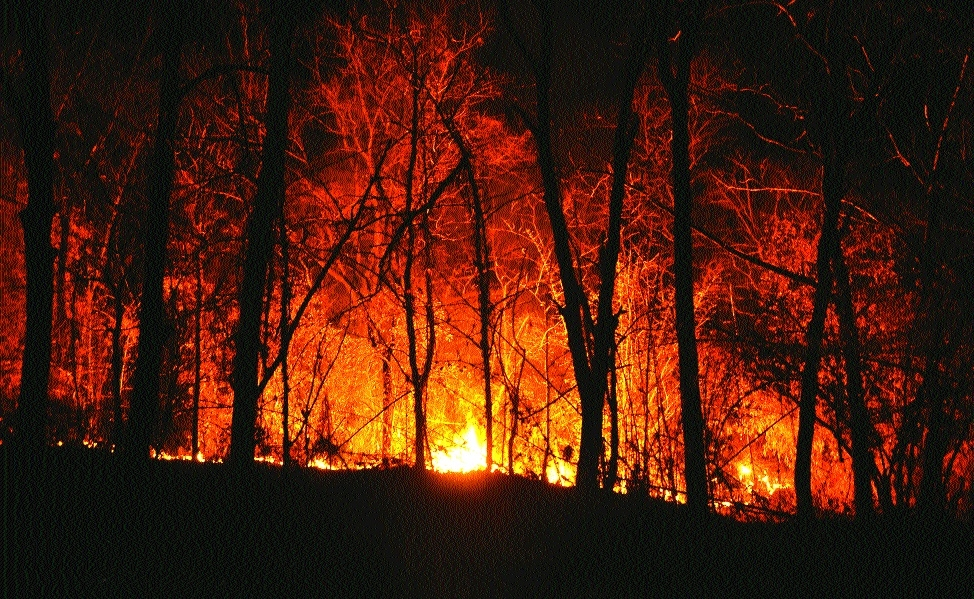 Fire engulfs a section of Seminary Hills forest