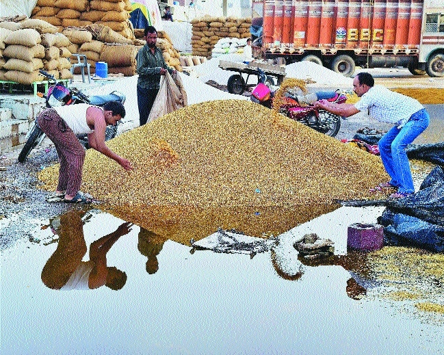Foodgrain drenched in rain water at a market in Bikaner.jpg