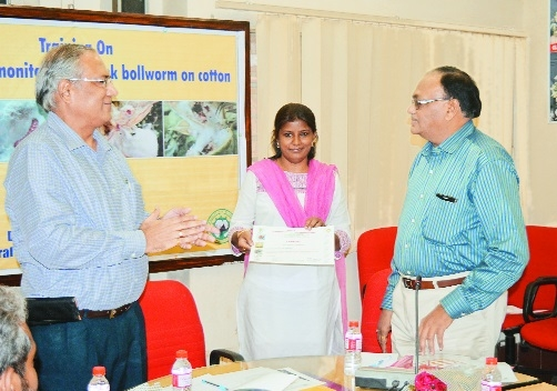 ICAR-CICR holds training to provide hands on experience on pink bollworm
