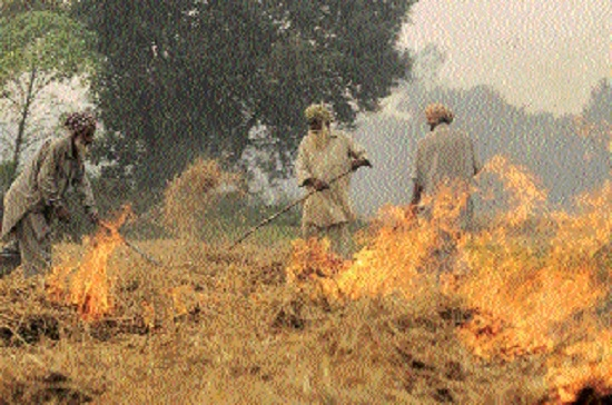 Tough stance to be taken against stubble burning of wheat, paddy chaff