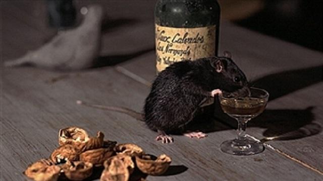 Rats guzzle down seized liquor in Bihar