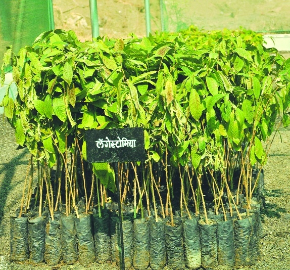 Saplings at Your Doorstep' scheme to begin from today