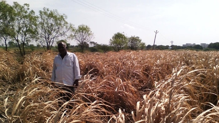Deficient rainfall worries farmers, hits sowing