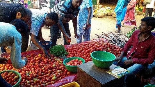Tomato prices skyrocket, stay out of common man's reach