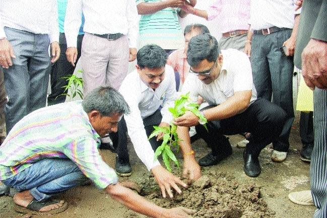 Divisional Commissioner plants saplings in Tehsil