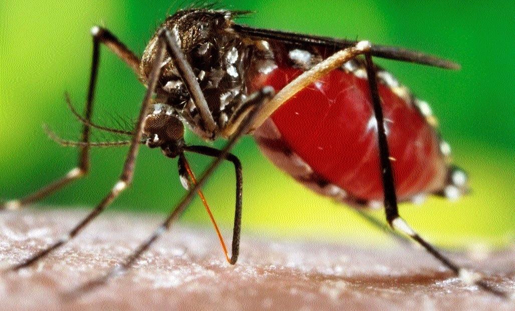 Dengue cases detected in Sehore
