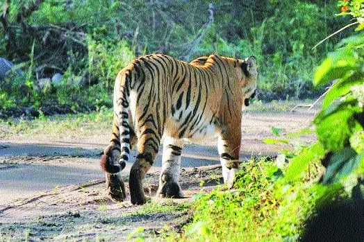 CATS Project to identify unreserved big cats' territories in Madhya Pradesh