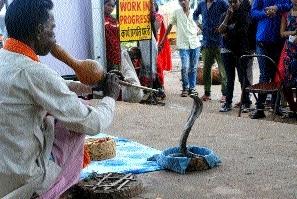 'Nag Panchami' losing charm!