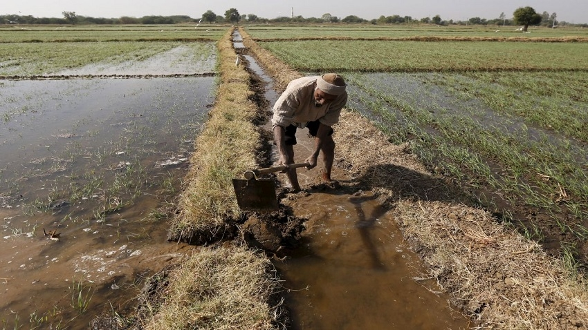 India using wastewater for irrigation, says study