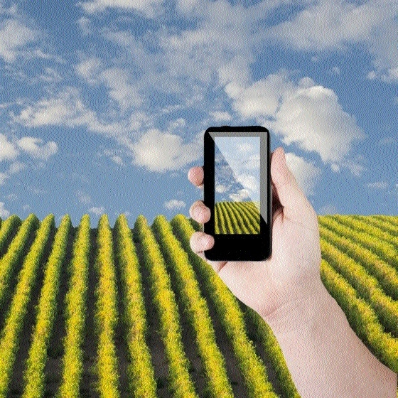 SMS services playing key role in agri extension