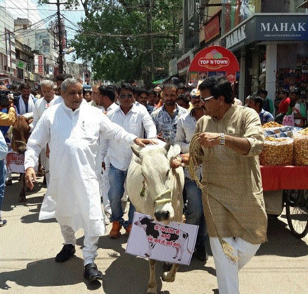 Congress demonstrates against cow deaths