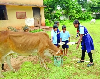 Children 'happily' passing their mid-day meal to cattle
