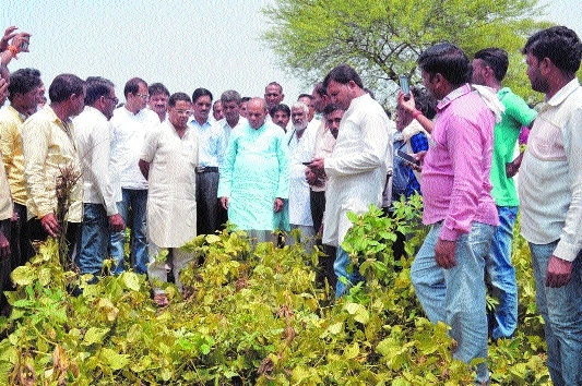 Minister Bisen inspects damaged crops in villages of Seoni distt