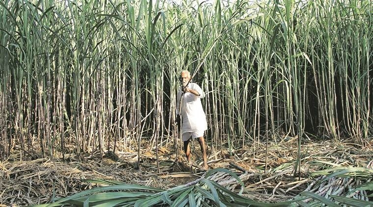 Efforts on to make loans available to farmers for bamboo plantation