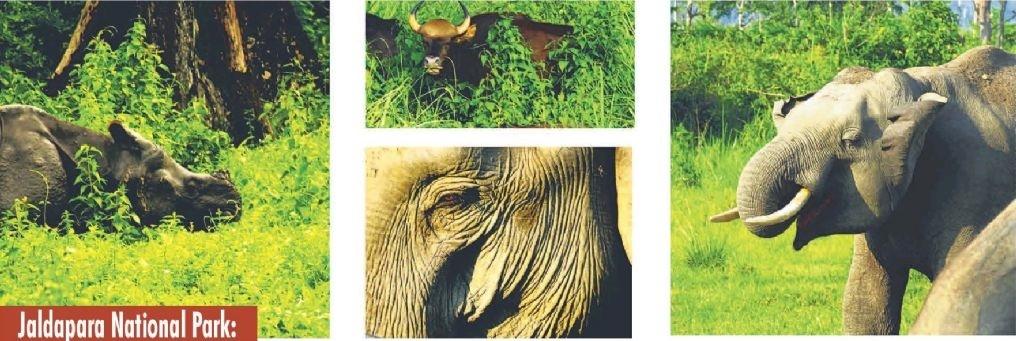 Jaldapara National Park: