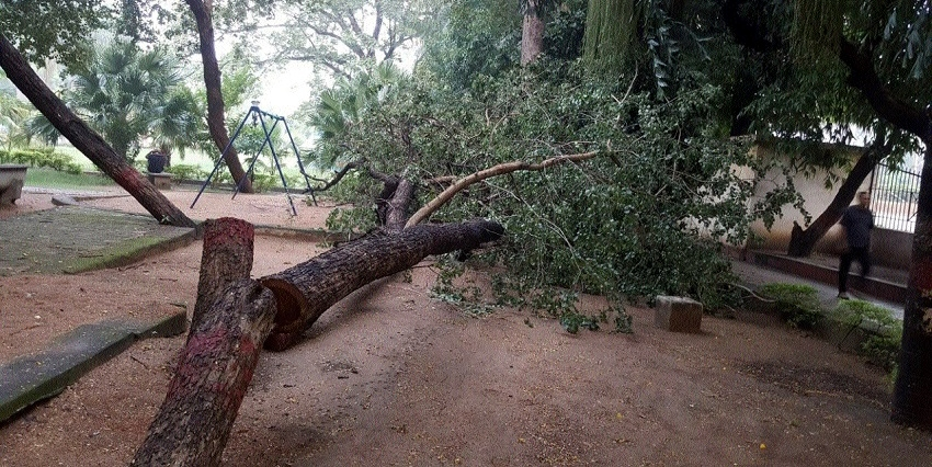 RMC cuts trees aged over two decades in Gandhi-Nehru Park