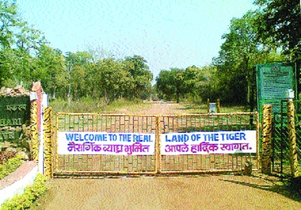Jungle safari in TATR to be a costly affair from Feb 1