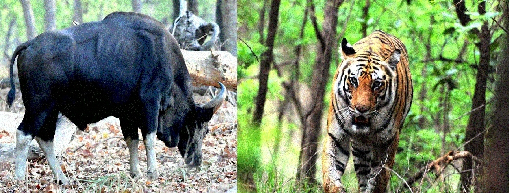 Expert concerned over wildlife scene in Chhattisgarh