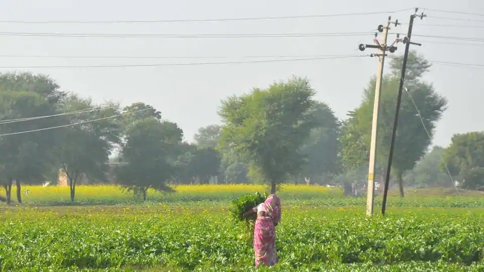 HDVS scheme for new connections to agri consumers