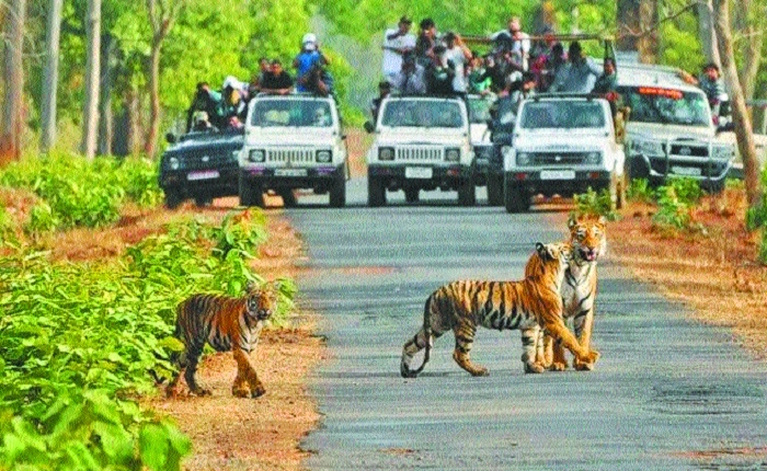 Gypsy vehicle rates to pinch tourists' pockets in Tadoba