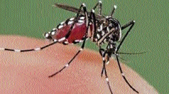 Dengue virus spreading faster in rural, semi-urban parts of state