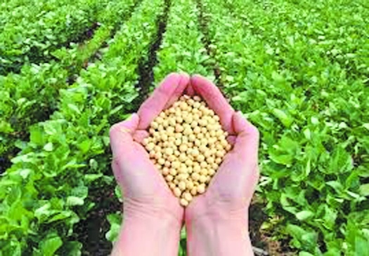 Soyabean prices touch Rs 3,350 per quintal