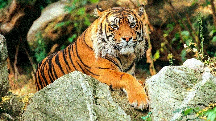 Good news: New tiger T-3 sighted in Kathotiya forest
