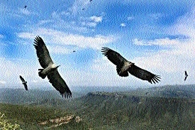 State-wide Vulture Census from January