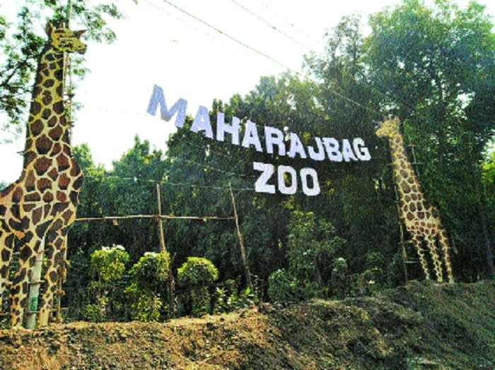 Maharajbag zoo admn hits back at CZA over pending devpt plan