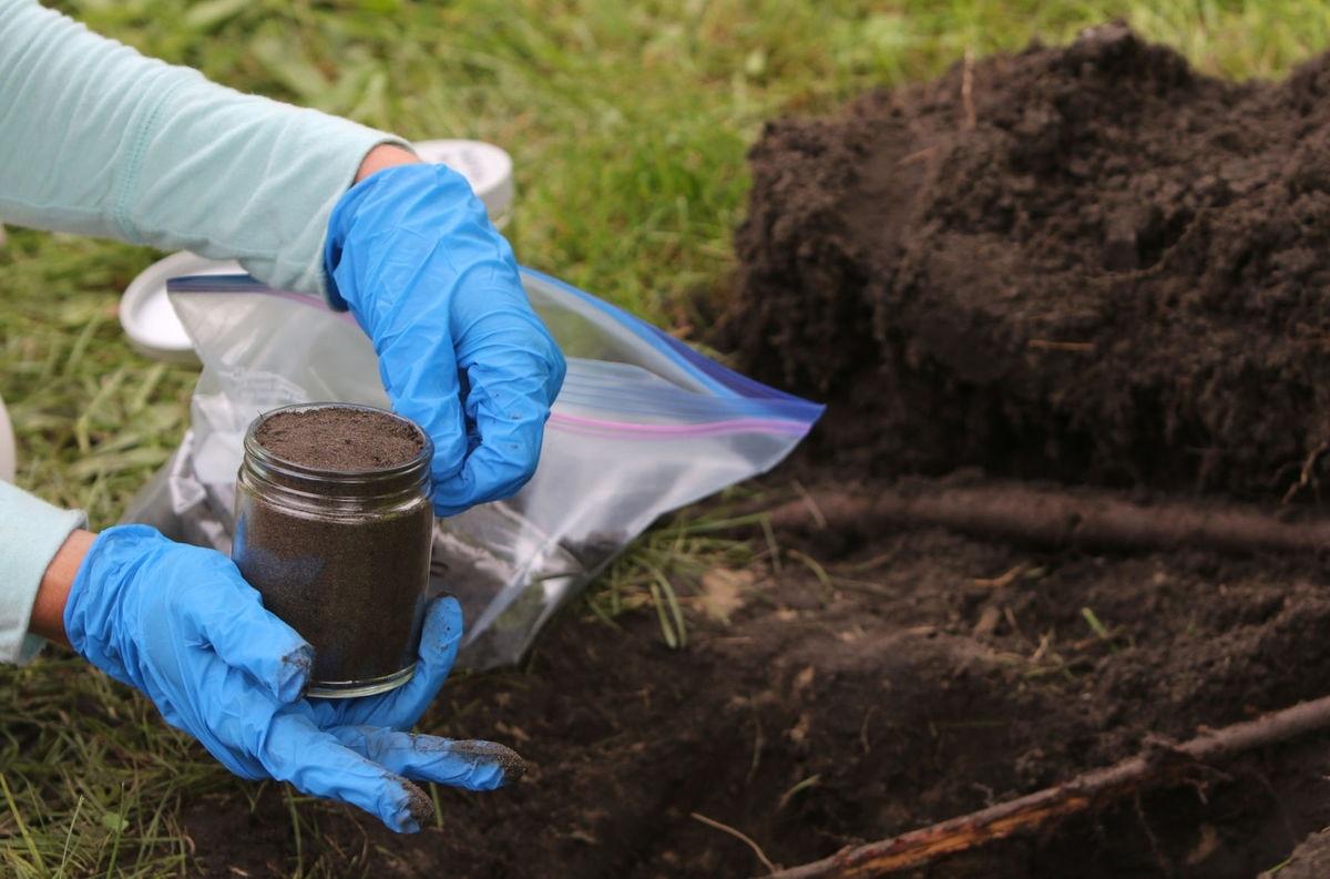 Indian scientist explores farming in arsenic contaminated soil