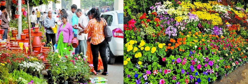 Aware citizens generating additional demand for saplings