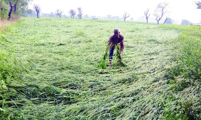 Farmers devastated as hailstorm damages crops