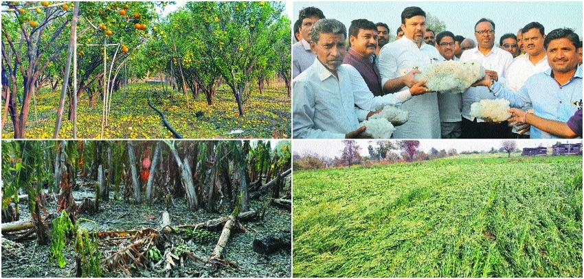 Hailstorm damages crops in 125 villages in district