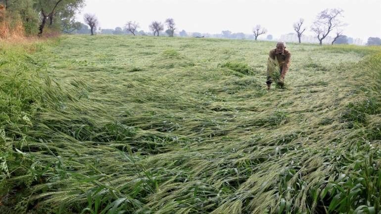 Mah Govt seeks Rs 200 cr aid for hailstorm-hit farmers from Centre