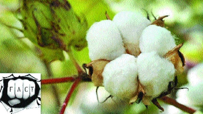 SIT to probe Monsanto's role in production, sale of herbicide-tolerant Bt Cotton in State