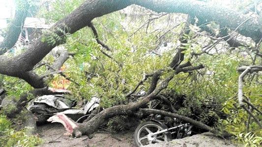 Youth hurt as tree falls in Waraseoni