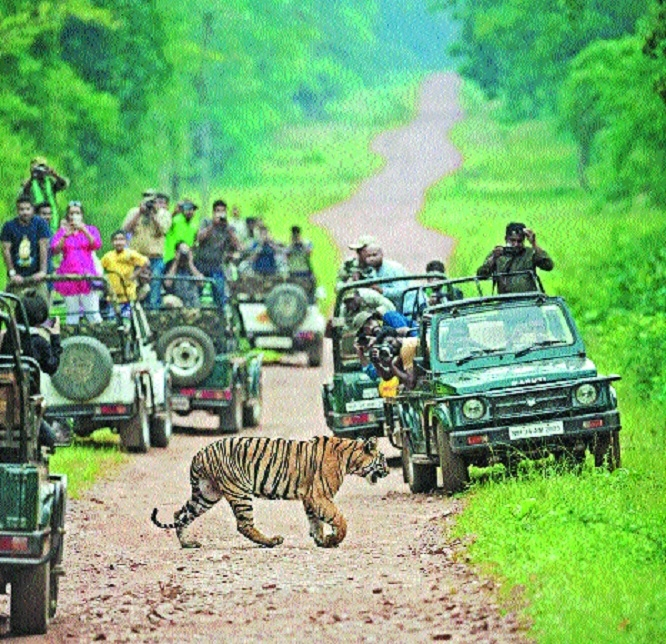 Are we waiting for disaster to strike in tiger reserves?